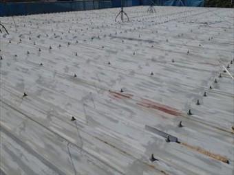 全体的に色褪せ、色むらの出てきた屋根