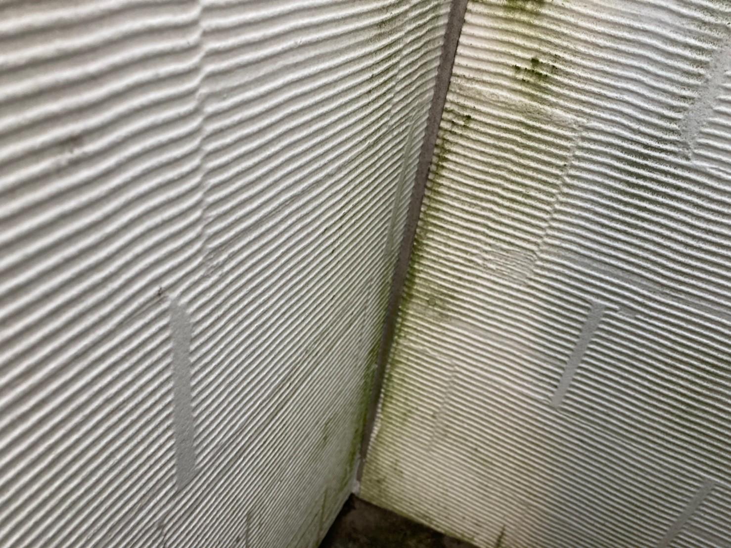 塗膜が劣化し外壁に苔が発生