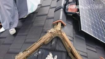 鳥の巣撤去工事