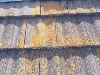 セメント瓦 屋根調査