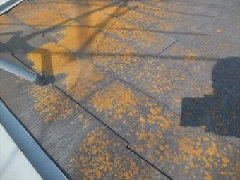 屋根点検 カラーベスト コケやカビ