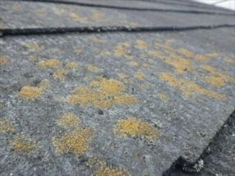 スレート カラーベスト 屋根点検 コケ カビ 褪色