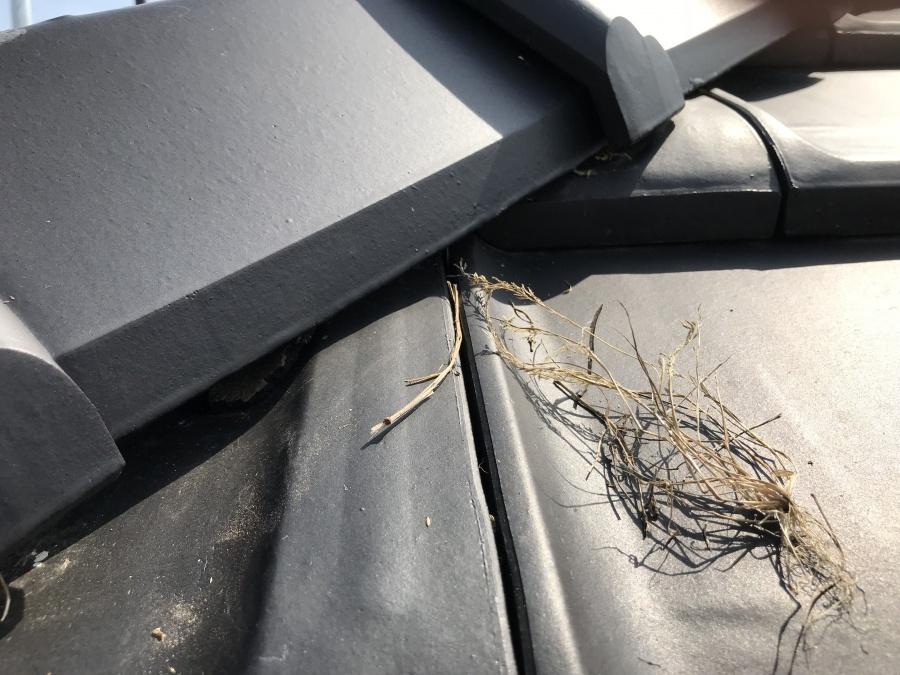 鳥の巣被害