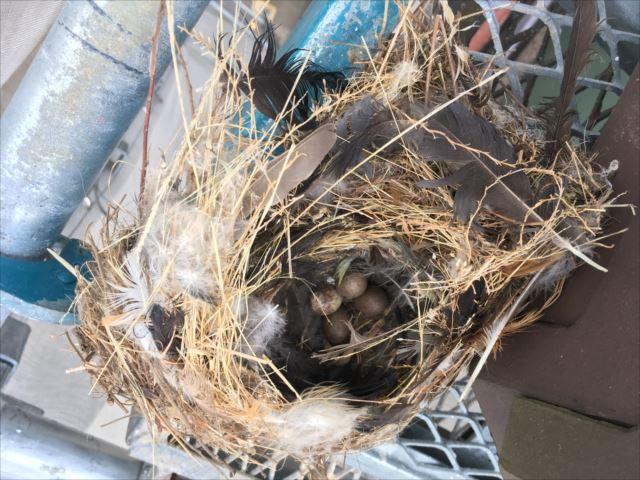 棟の取直し 平板瓦 鳥の巣