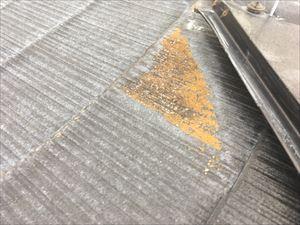 屋根点検 カビの付着